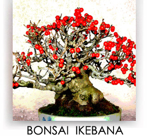 BONSAI - IKEBANA